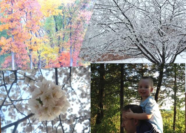 Four Seasons in Illinois