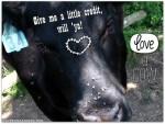LOVE a COW