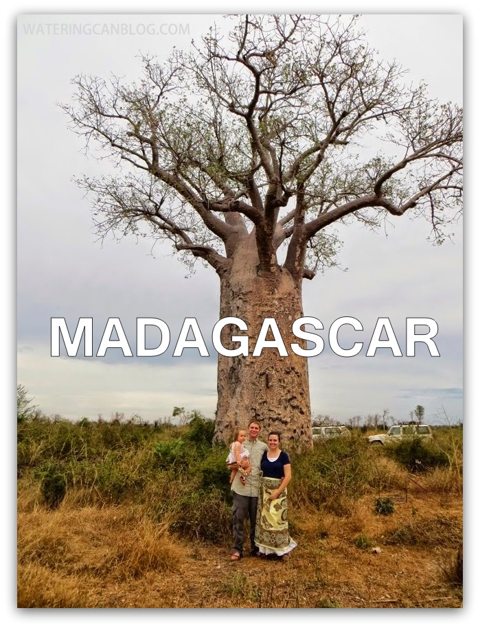 Madagascar tree