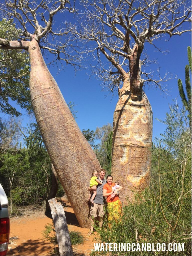Baobob Forest, Ifaty, Madagascar