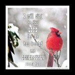 1-Cardinal in the snow