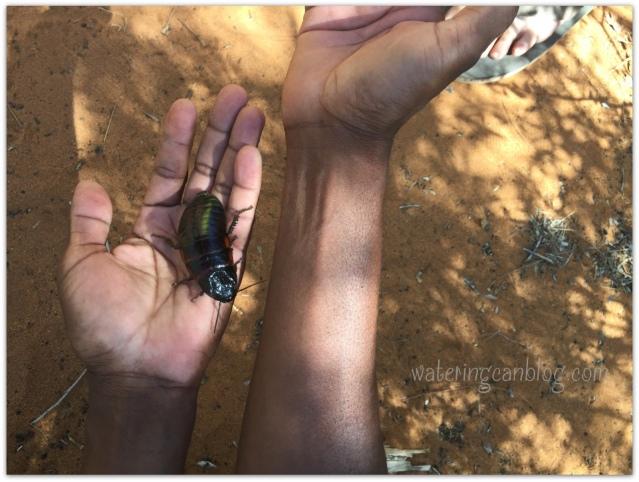 Madagascar BUG