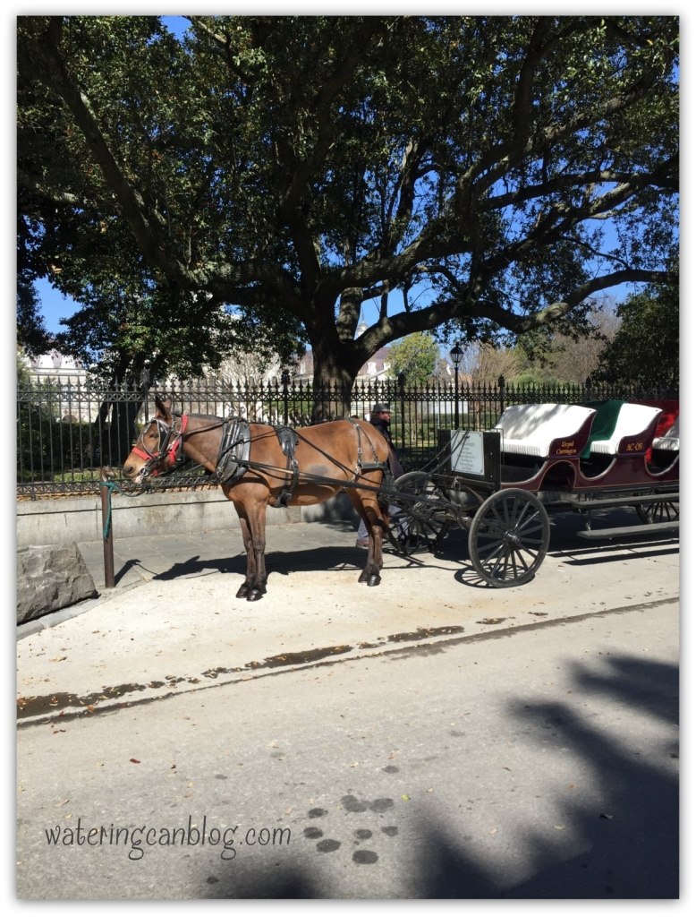 New Orleans Transportation