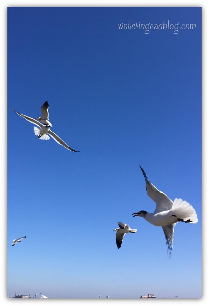 Birds in Flight, New Orleans