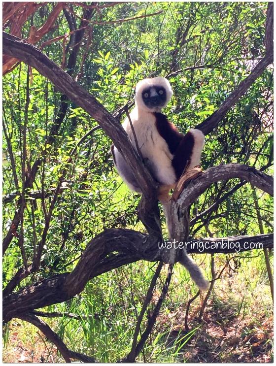 Lemur Park, Madagascar 2015