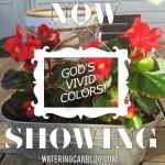 God's Vivid Colors 6-10-2015 10-25-36 AM