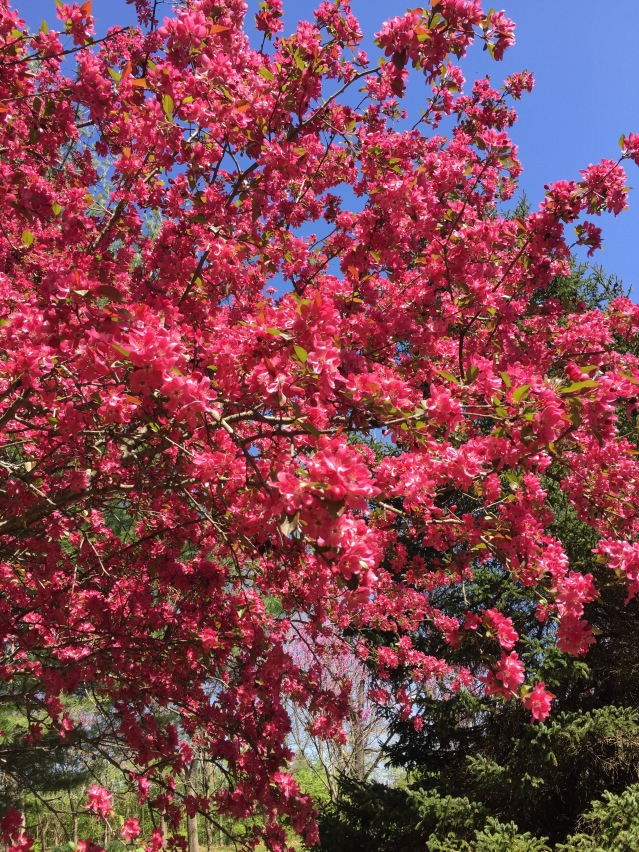 Springtime at Fox Ridge