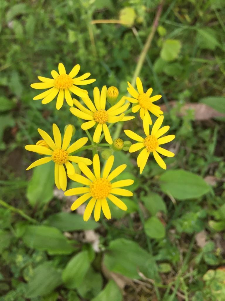 Spring flowers at Fox Ridge