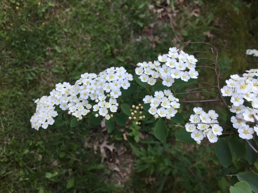Spring flowers blooming at Fox Ridge