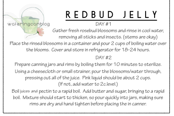 #redbud #jelly #homemade #diy #recipe #wateringcanblog